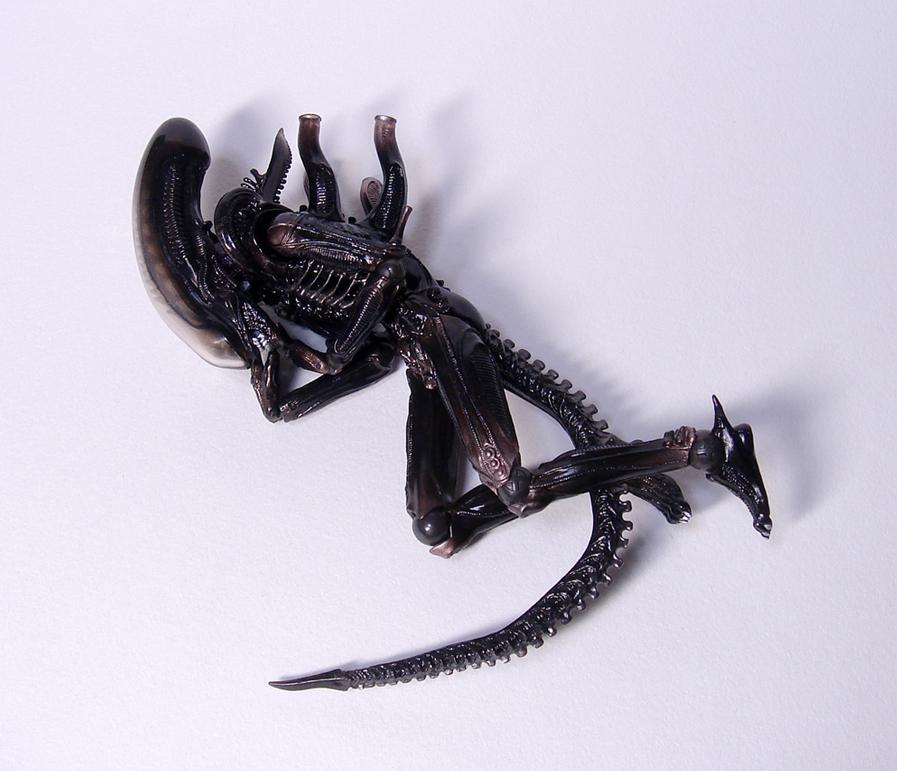 alien_ribo.jpg